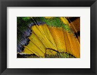 Framed Wing Pattern Of Tropical Butterfly 2