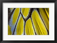 Framed Wing Pattern Of Tropical Butterfly 3