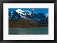 Framed Chilean Flamingo On Blue Lake, Torres Del Paine NP, Patagonia
