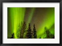 Framed Alaska Aurora Borealis Over Forest