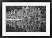 Framed Alaska, Inside Passage, Reflecting Trees