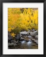 Framed California, Eastern Sierra Bishop Creek During Autumn