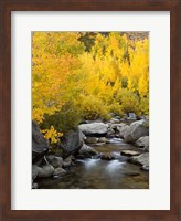 Framed California, Eastern Sierra Bishop Creek During Autumn