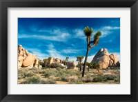 Framed Joshua Trees With Granite Rocks