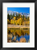 Framed Yosemite's Mount Dana