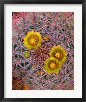 Framed Close Up Of California Poppies