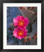 Framed Cactus Flowers In Spring