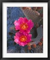 Framed Cactus Flowers In Spring
