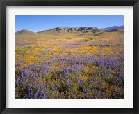 Framed Wildflowers Bloom Beneath The Caliente Range, California