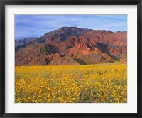 Framed Black Mountains And Desert Sunflowers, Death Valley NP, California