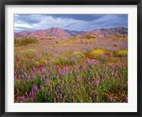 Framed Cottonwood Mountain Landscape, Joshua Tree NP, California