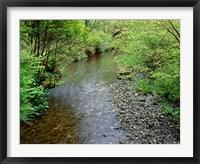 Framed Prairie Creek, California