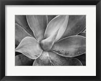 Framed California, Del Mar Succulents (BW)