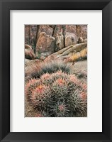 Framed California, Alabama Hills, Cactus