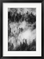 Framed Swirling Forest Mist, Yosemite NP (BW)