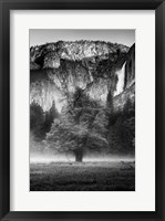Framed Misty Californian Oak (BW)
