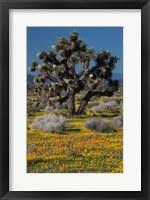Framed Mojave Desert Joshua Tree