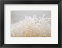 Framed Dried Winter Grasses Covered In Hoarfrost