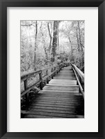 Framed Big Bend Board Walk, Florida (BW)