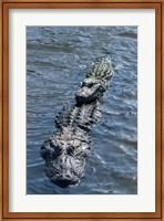 Framed Stacking Alligators