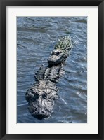 Framed Stacking Alligators