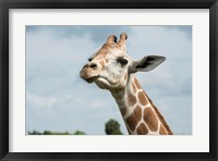 Framed Close-Up Of Giraffe Against A Cloudy Sky