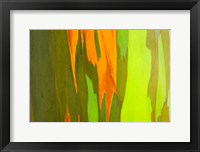 Framed Rainbow Eucalyptus Bark, Hawaii