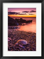 Framed Hawaiian Green Sea Turtle On A Lava Beach At Sunset, Hawaii