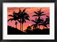 Framed Sunset Through Silhouetted Palm Trees, Kona Coast, Hawaii