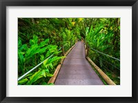 Framed Trail At The Hawaii Tropical Botanical Garden