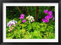 Framed Orchids At The Hawaii Tropical Botanical Garden
