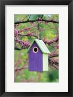 Framed Bird House In Eastern Redbud, Marion, IL
