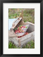 Framed Cranberries And Scoop, Massachusetts