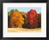 Framed Autumn In The Upper Peninsula Of The Hiawatha National Forest