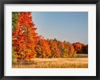 Framed Fall Colors Of The Hiawatha National Forest