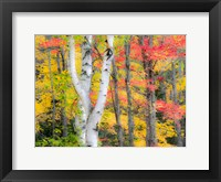 Framed Hardwood Forest In Autumn