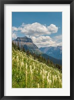 Framed Beargrass As Seen From Glacier National Park