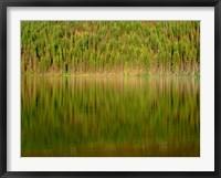 Framed Conifer Forest Reflects In Kintla Lake, Montana