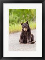 Framed Bear Cub On Camas Road