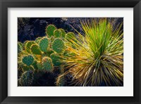 Framed Cactus On Malpais Nature Trail, New Mexico