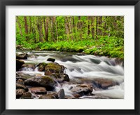 Framed Water Flows At Straight Fork, North Carolina