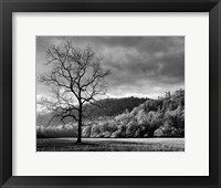 Framed Storm Clearing At Dawn In Cataloochee Valley, North Carolina (BW)