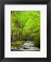 Framed Straight Fork River, North Carolina