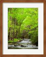 Framed Straight Fork River, North Carolina