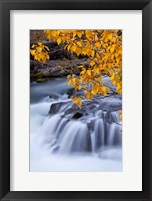 Framed Rogue River Waterfalls In Autumn, Oregon