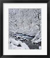 Framed Snow On Boulder Creek, Oregon