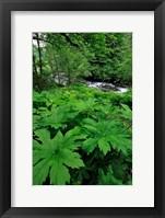 Framed Scenic View Of Little Sandy River, Oregon