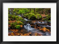 Framed Autumn Color Along Starvation Creek Falls In, Oregon