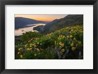 Framed Wildflowers At Rowena Plateau,  Oregon