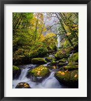 Framed Mccord Creek In Autumn, Oregon